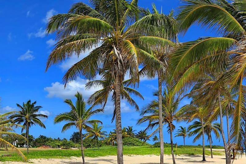 Playa Pesquero Beach Palm Trees